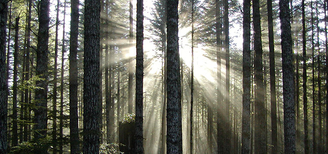 Sunlight breaking through the forest