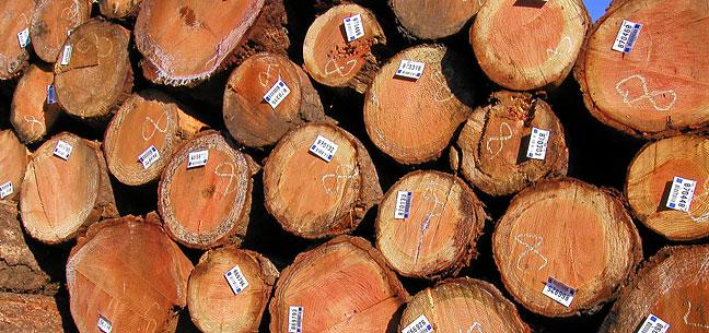 Starker Forests logs in log yard near Philomath, Oregon.