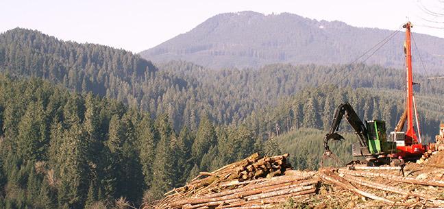 Loggin in the Marys Peak Wilderness